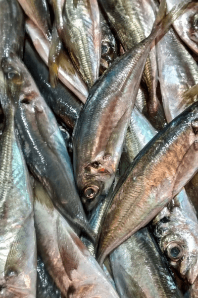 Catching Mackerel in Tampa, Florida