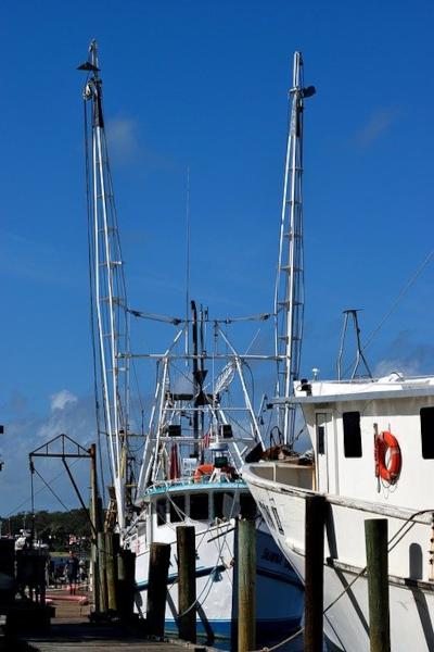 hiring a fishing charter in tampa