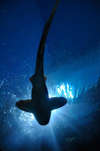 Shark Fishing Spots in Tampa Bay, Florida