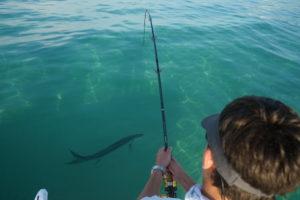 tampa florida offshore fishing